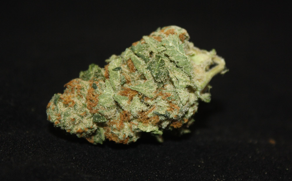 lemon-pie-leafs-by-snoop-dogg-weed-strain
